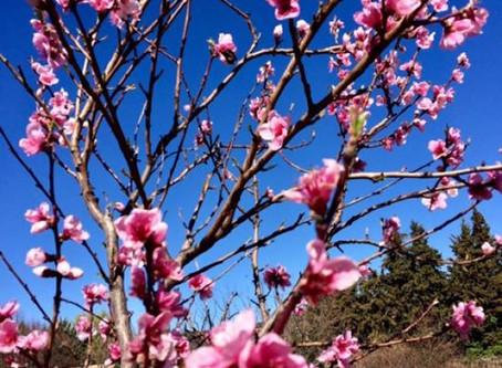 Colourful sunny Sunday @ La Plantade Provence !