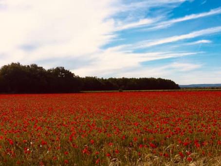 Hello Provence