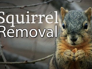 Treat Your Squirrel Syndrome