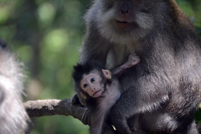 singe_monkey_forest.JPG