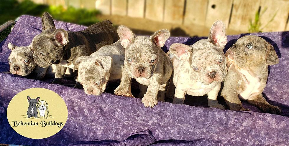 Puppies Banner lOGO.jpg