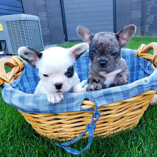 mallow and chip in basket jpg.jpg