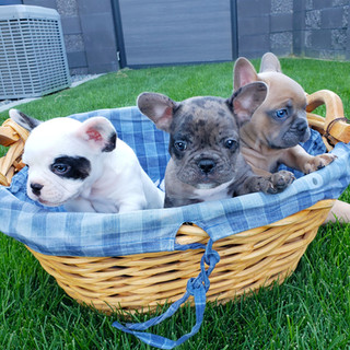 group in basket jpg.jpg