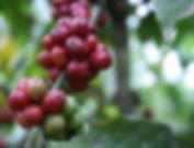 Coffee Beans 4.jpg