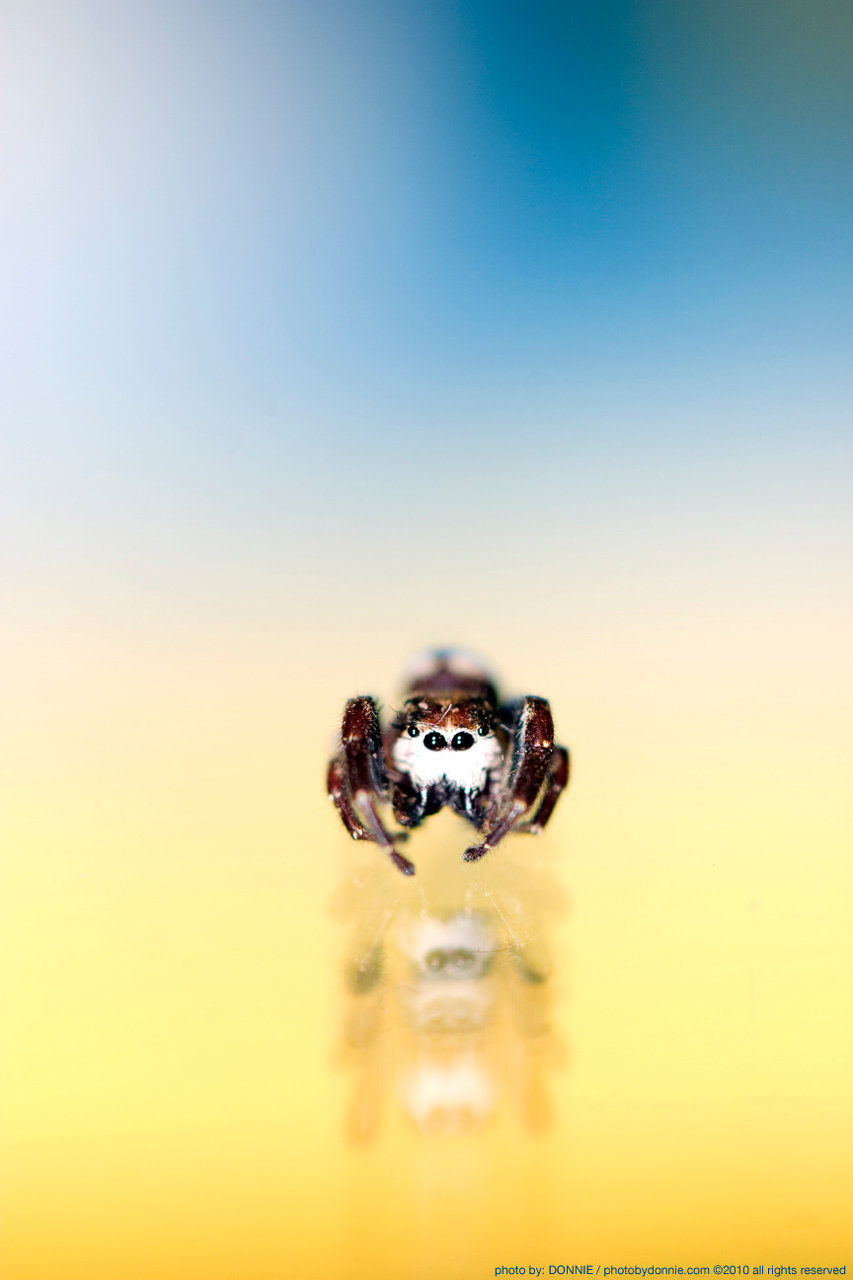http://www.themirrorroom.com/pbd_images/littlespider