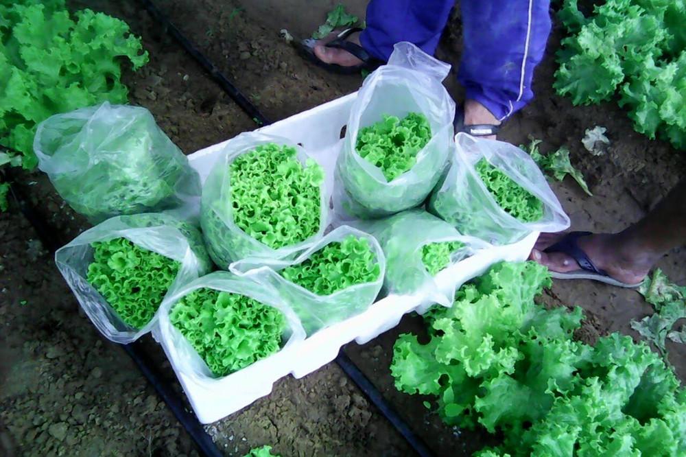 agricultura-no-sertao