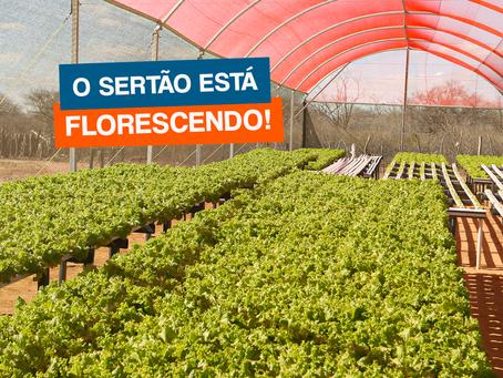 O SERTÃO ESTÁ FLORESCENDO