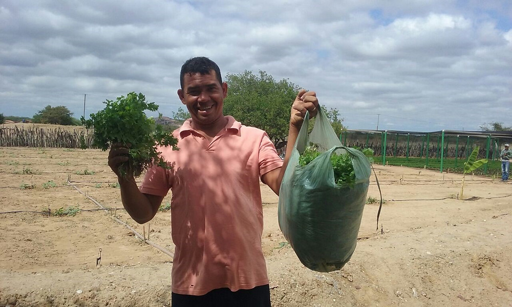 projeto-agricola