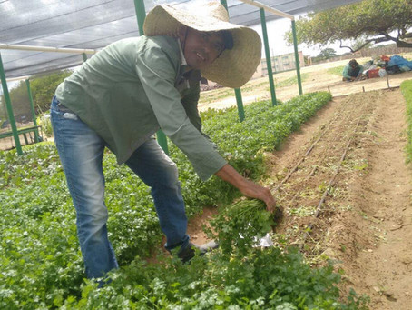 Projeto de aplicações agrícolas em Casa Nova