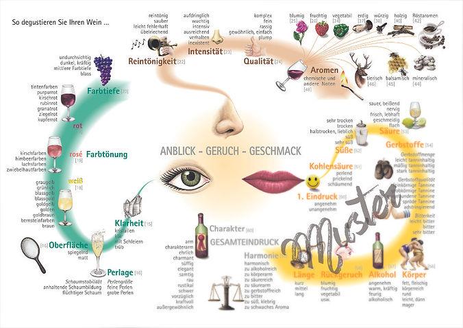 wine map, degustationsablauf,verkostungsschritte