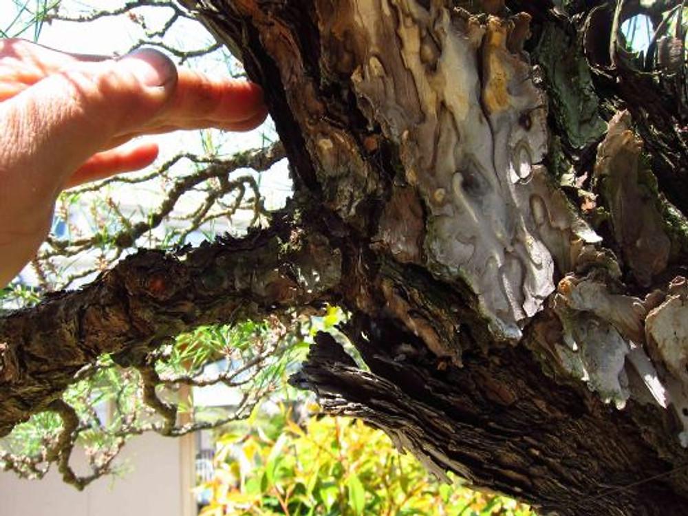 branch2