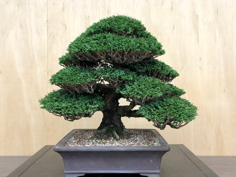 Horticulture of Bonsai, the beginning...
