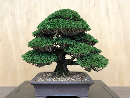 Horticulture of Bonsai, the beginning...