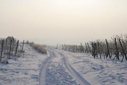 Rheinhessen Mommenheim Winter