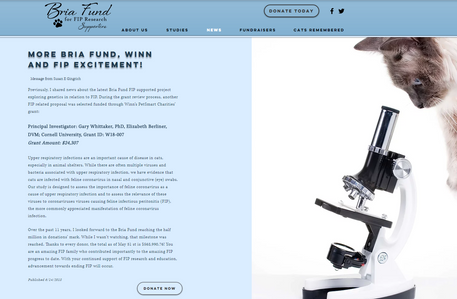 Bria Fund News.PNG