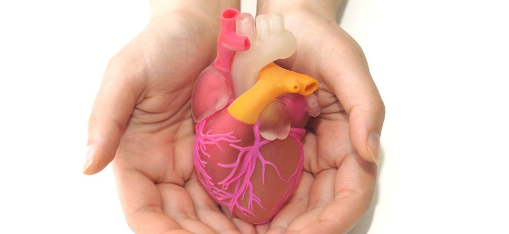 stock photo o a person holding a model of a human heart