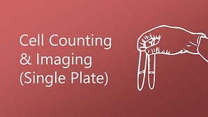 Cell Counting and Imaging (Single Plate)