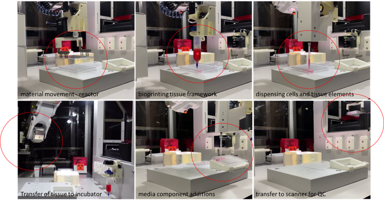 Figure 3. Still images from a video of the entire automated MVP-liver tissue biofabrication highlighting keep steps (circled in red) including plate movement and lidding, printing tissue forms, pipetting primary cells and media, moving plates of tissues to and from the BioStorageBot™ incubator and HCA scanner.
