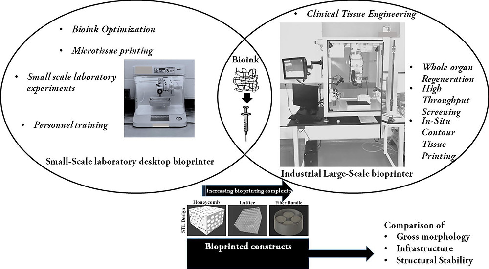 A comparative study in the printability of a bioink and 3D models across two bioprinting platforms, Materials Letters, Volume 264, 2020, 127382, ISSN 0167-577X