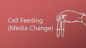 Cell Feeding (Media Change)