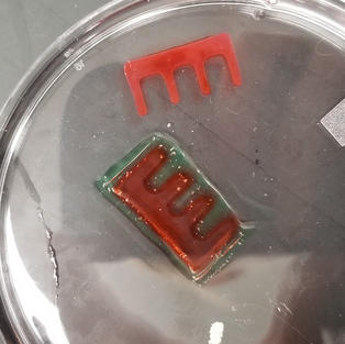 Printed Collagen in a Printed Pluronic Mold