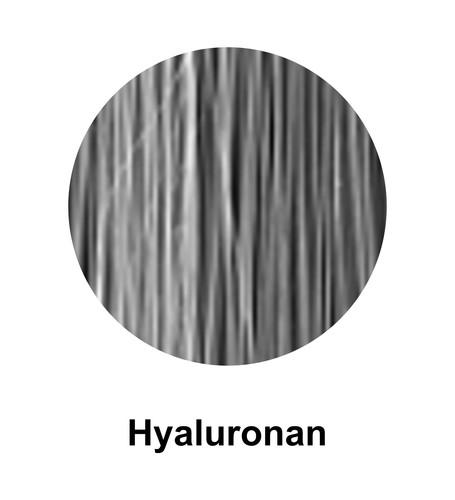Hyaluronan