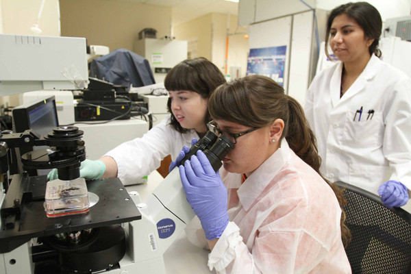UTEP's new Inspired Materials and Stem Cell Based Tissue Engineering Laboratory (IMSTEL) is using stem cells for potential health applications, like stents and cardiac patches. Photo by J.R. Hernandez / UTEP News Service