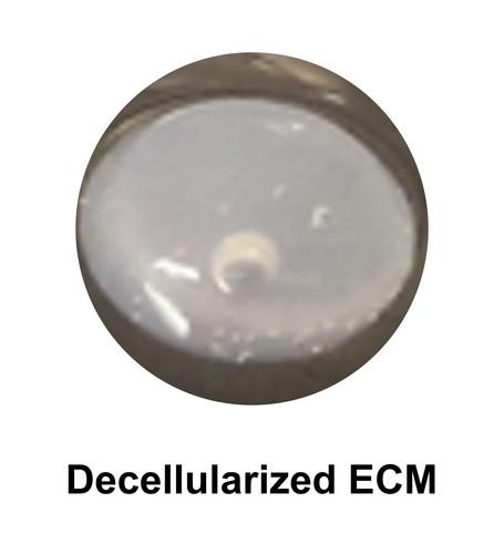 Decellularized ECM