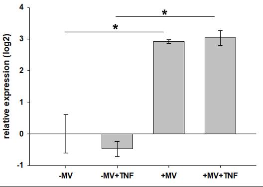 Vascularized Adipose Organoid