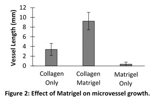 Effect of matrigel on microvessel growth
