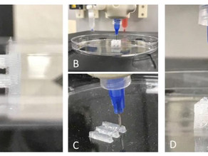 Advanced Solutions demonstrates 3D tissue constructs using silicone bioprinting on BioAssemblyBot