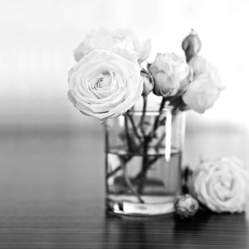 Julie Boro I Shutterstock