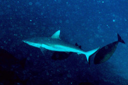 Shark Flats (8).jpg