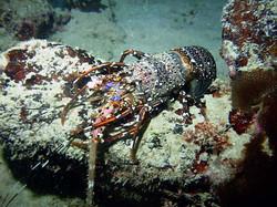 Aquarium Rock (22).JPG