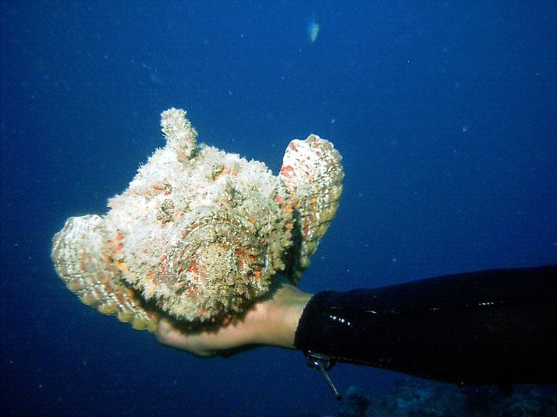 Aquarium Rock (12).JPG