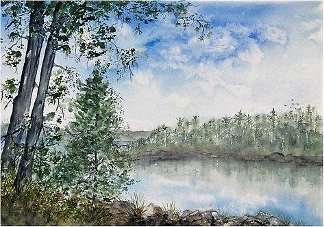 Wild Adirondack Lake