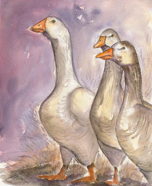 Pilgrim Geese Trio