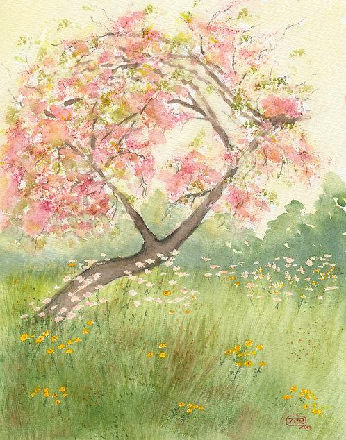 Hassam's Peach Blossoms in Watercolor