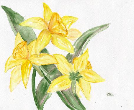 Laura's Daffodils