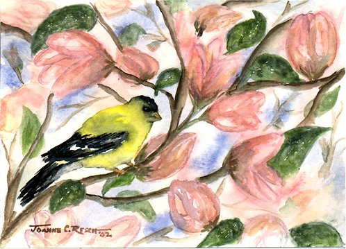 Goldfinch In The Magnolia Tree