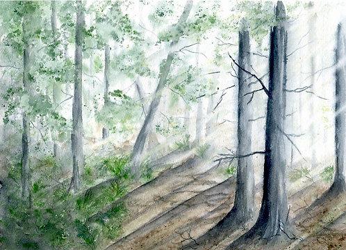 Sunlit Balsam Wood