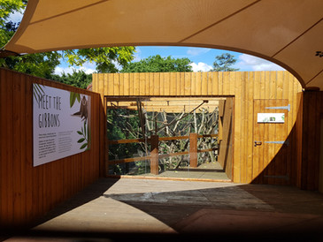 Gibbons, ZSL London Zoo