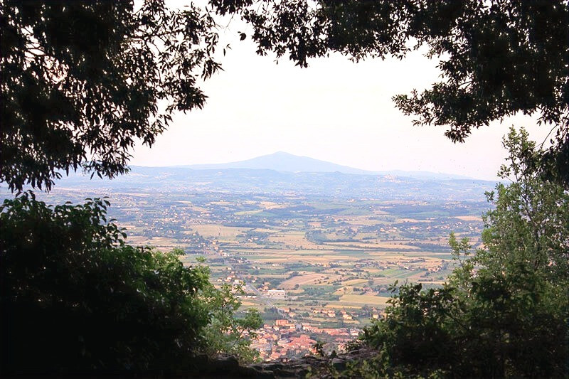 an expansive view of the Tuscan landscape framed by trees and bushes