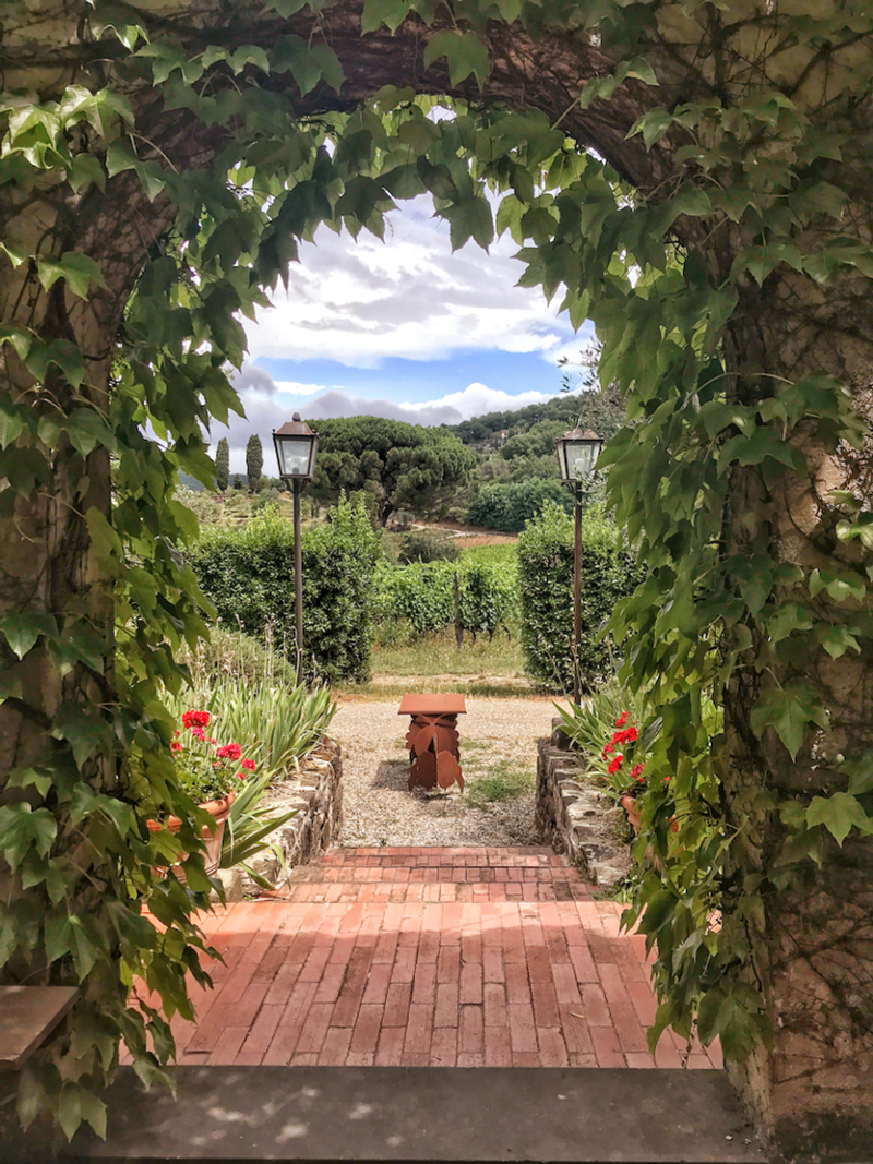 arched doorway covered in vines and a view of grapevines