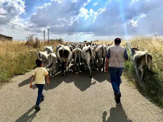 Unique Cultural Traditions in Italy: The Transumanza