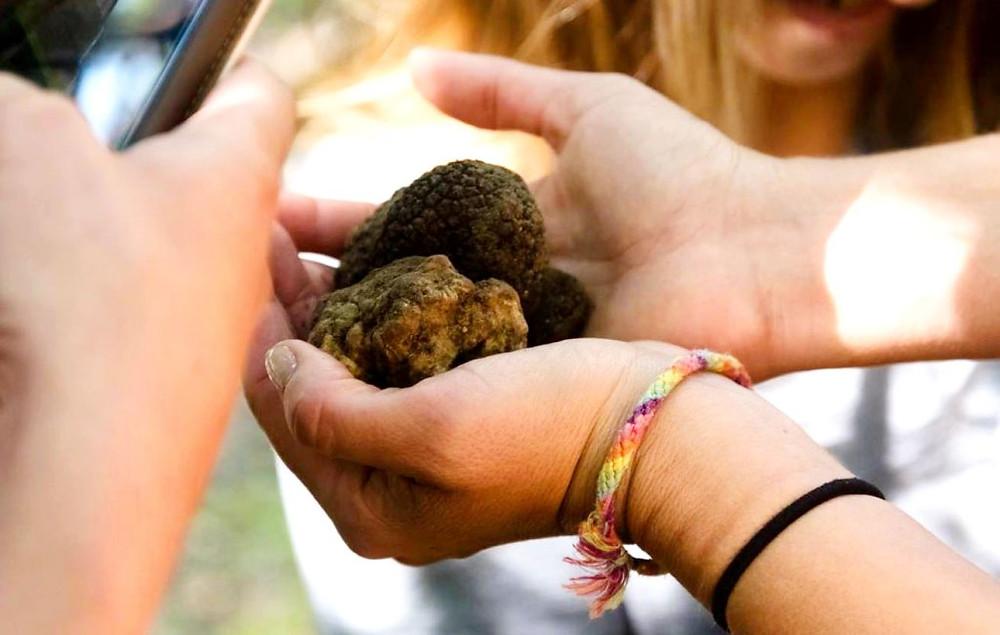 Treasure truffle hunt in Mugello, Tuscany, Poggio alle Ville