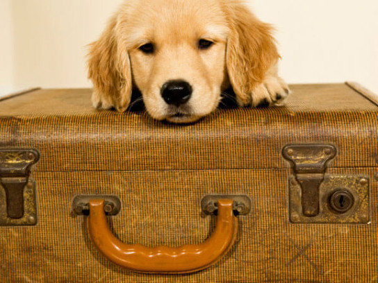 How to Organize Your Suitcase for Stress-Free Travel
