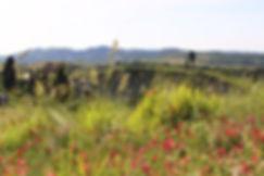 wild tuscany countryside