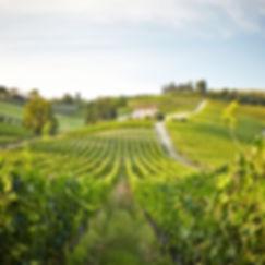 scenic vinyard farmhous in italy