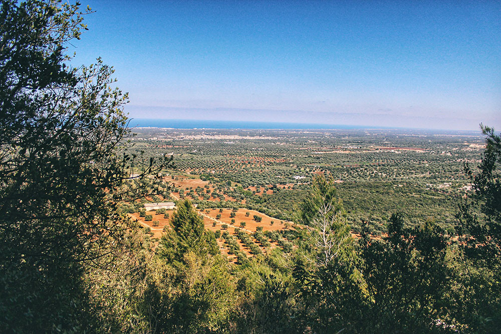 panorama of flat landscape olive groves and Adriatic Sea in Apulia Italy